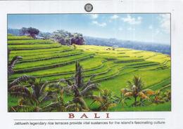 Farmer Works On Bali Island Terraced Ricefielfs.  Mint Uncirculated Postcard Bali Indonesia - Cultures