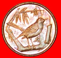 # BIRD (1992-1996): CAYMAN ISLANDS ★ 1 CENT 1992! LOW START ★ NO RESERVE! - Cayman Islands