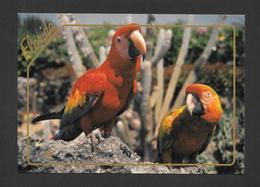ANIMAUX - ANIMALS - PAROQUETS - PARROTS CAN BE SEEN AT MIAMI'S PARROTS JUNGE- GRAND FORMAT 6¾ X 4¾ Pouces - 16½ X 12 Cm - Oiseaux