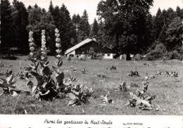 25-PANORAMA DU HAUT DOUBS-N°527-C/0345 - France