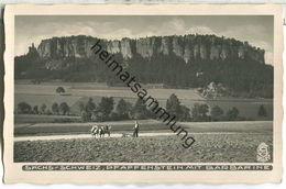 Pfaffenstein Mit Barbarine - Kuhgespann - Foto-Ansichtskarte - Verlag Walter Hahn Dresden Nr. 2713 - Otros