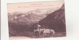 CPA - 766. Un Troupeau Dans La Haute Montagne, Plateau De Lers - Autres Communes