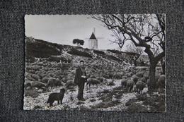 FONTVIEILLE - Troupeau De Moutons,Berger Et Son Chien, Berger De Brie , Devant Le Moulin De DAUDET.( Cachet Au Verso). - Fontvieille