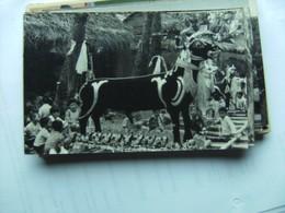 Indonesië Indonesia  Bali ? Photo Postcard People And Some Nice Animals - Indonesië