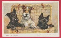 Scotch Terrier / Terrier écossais ... Illustré ( Voir Verso ) - Chiens