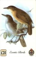 *REGNO UNITO* - Scheda Usata - Uccelli Canterini Ed Arboricoli