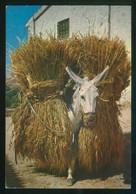 *Borrico Cargado De Trigo* Ed. CyP Color Serie II, Nº 5010. Dep. Legal B. 28464-VI. Nueva. - Agricultura