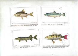 4 Image Poisson Planche Musee Histoire Naturelle - Animaux