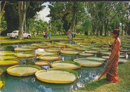 MAURITIUS--ILE MAURICE--RARE---plamplemousses-gardens--jardins De Pamplemousses--voir 2 Scans - Maurice