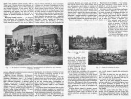 LA CULTURE Des PLANTES MEDICINALES  1918 - Santé