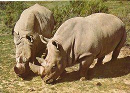 Réserve Africaine De Sigean. Rhinocéros. - Rhinocéros