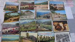 150CPM Sur Les Moutons Et Les Bergers, Carnejos- Sheep ; - Tierwelt & Fauna