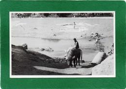 PAKISTAN (LAHORE) Métier De La Rue  LAVOIR ET ABREUVOIR Trés Animée Année 1950  CPH 14cmX9cm  Impeccable - Pakistan