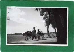 PAKISTAN (LAHORE) VERS LE MARCHE  Trés Animée Année 1950  CPHoto 14cmX9cm  Impeccable - Pakistan