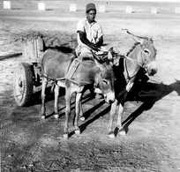 PAKISTAN (LAHORE)attelage D'anons Trés Animée Année 1950  CPHoto 5,50cmX5,50cm  Impeccable - Pakistan