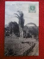 SEYCHELLES  RAFFIA TREE MAHE TIMBRE BRITISH COLONY - Seychelles