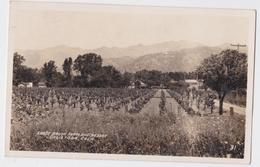 SHADY BROOK FARM AND RESORT CALISTOGA CALIFORNIA 1929 PHOTO POSTCARD - Etats-Unis