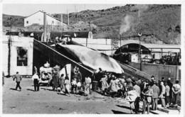 Islande / 01 - Whaling Station Un The Bay - Islande