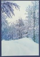 Theth, Winter Landscape, Shkodër, Scutari, Albania, Shqipëria - Albania