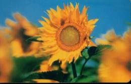 Russia Chip Cards, Sunflower , 50u (1pcs) - Russia