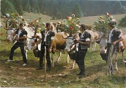 CPM. DESCENTE DE TROUPEAUX . VACHES DECOREES . Photo  STAINACRE De PONTARLIER .AFFR AU VERSO LE 11-8-1980 . 2 SCANES - Autres Communes