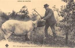 Scène Du Centre - Groupe Sympathique Cherchant La Truffe - Cochon - Lot - Cecodi N'1069 - France