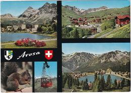 Arosa : Aerial Tramway LAW 4  - Squirrel / Hörnchen / Sciuridae  - (CH.) - Kabelbanen
