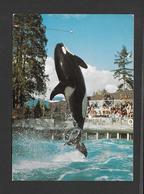 ANIMAUX - ANIMALS -  THE KILLER WHALE SKANA - BALEINES - VANCOUVER AQUARIUM B.C. - PHOTO PIERRE DOW - Animaux & Faune