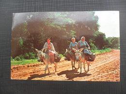 PARAGUAY BURRERITAS, DONKEY - Paraguay