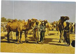 AFGHANISTAN - STOOCKYARD GHAZNI  - DELC7 - - Afghanistan
