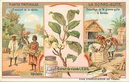CH276 - Chromo Liebig - Plantes Tinctoriales - La Gomme Gutte - Borneo  - Chromo Bon Etat - - Liebig
