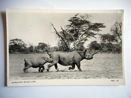 CPSM AFRICAN WILD LIFE N 16 RHINOCEROS - Rhinocéros