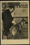 P0301 - DR Photo Hoffmann Postkarte Nr. 338, Adolf Hitler Mit Schäferhund: Ungebraucht. - Deutschland