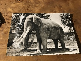 269/ SAINTE GENEVIEVE DES BOIS ELEPHANT EN BETON - Sainte Genevieve Des Bois