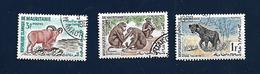 MAURITANIA - Chimpanzés