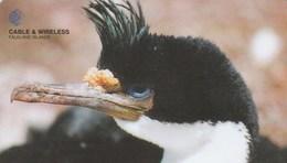 Falkland Is. - King Cormorant - 229CFKA - Falkland Islands
