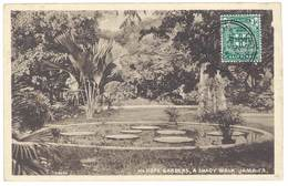 Cpa Jamaïque / Jamaica - Hope Gardens - A Shady Walk - Jamaïque