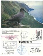Albatros Fuligineux à Dos Sombre - Ile Amsterdam - Oiseaux