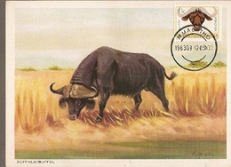 Bophuthatswana & Maxi, Fauna, Bufalo, Syncerus Caffer, Mmabatho 1983 (1) - Botswana