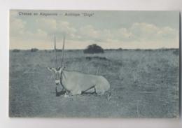 CHASSE En ABYSSINIE - Antilope Oryx - Ethiopie