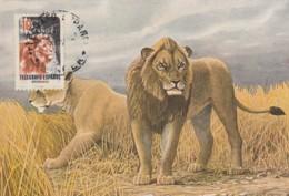 Tanger. Telegrafo Espanol. 4 Maximum Cards Lion, Tiger, Gazelle, Springbok, 1986 - Sin Clasificación
