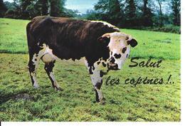 ANIMAUX VACHES SALUT LES COPINES - Circulé - Vaches
