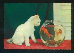 Gato Y Peces. Ed. Cecami Nº 292. Fabricación Italiana. Al Dorso *Kodak Ekthachrome* Nueva. - Gatos
