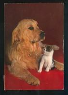 Gato Y Perro. Ed. C. Y Z. Nº 7273/31-B. Circulada. - Perros