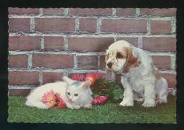 Gato Y Perro. Ed. C. Y Z. Nº 6084. Nueva. - Perros