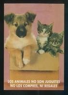 Gato Y Perro. Ed. Amnistía Animal, Zaragoza. Circulada 1999. - Perros