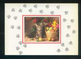 Gato. Ed. A. G. Ricordi Nº 1742. Serie *De Luxe* Nueva. - Gatos