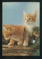 Gato. *Young Domestic Cats* Fabricación Alemana. Nueva. - Gatos