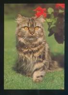 Gato. *Persian Cat* Fabricación Alemana. Nueva. - Gatos