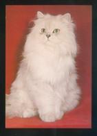 Gato. *Chinchilla* Fabricación Alemana. Nueva. - Gatos